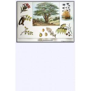 Miniposter - Uit de plantenwereld